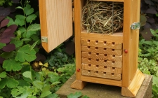 School insects study | gardenature.co.uk