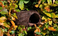 nest pocket for robins | gardenature