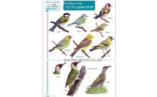 top 50 garden bird guide
