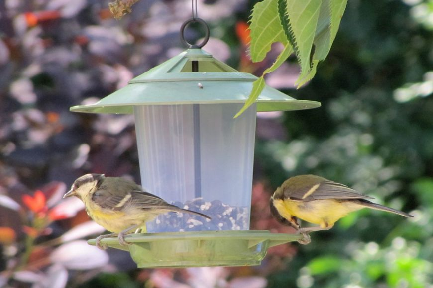hanging bird table | gardenature.co.uk