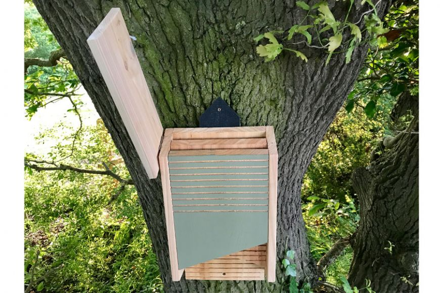 bat box for conservation | gardenature