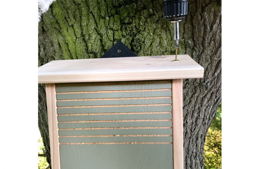 conservation bat box opening
