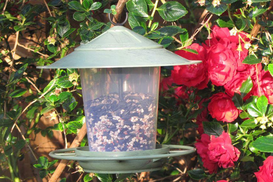 tree hanging bird feeder | gardenature