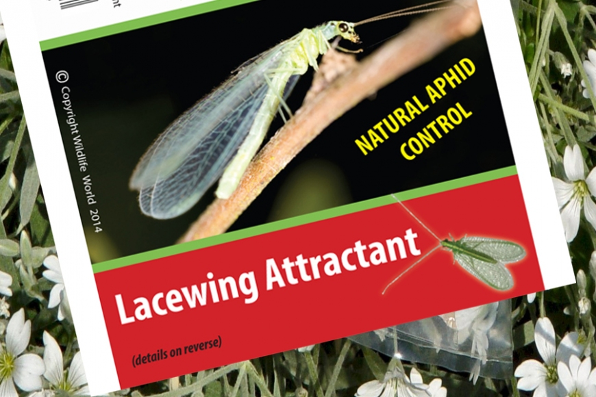 Lacewing food | gardenature.co.uk