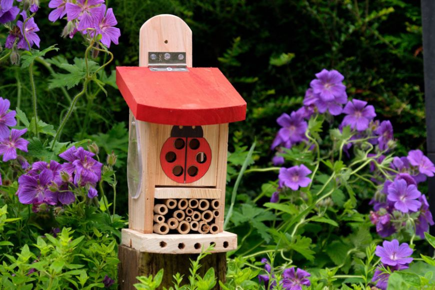 ladybird insect house | gardenature