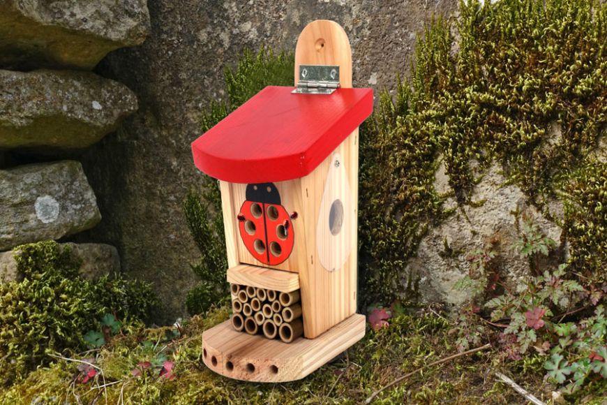 Ladybird habitat | gardenature