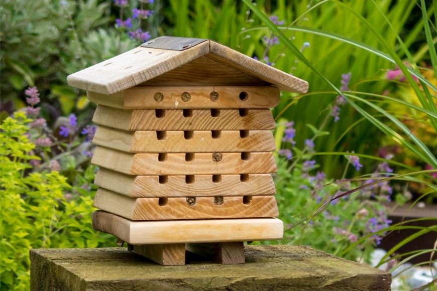 Solitary Bee | gardenature.co.uk