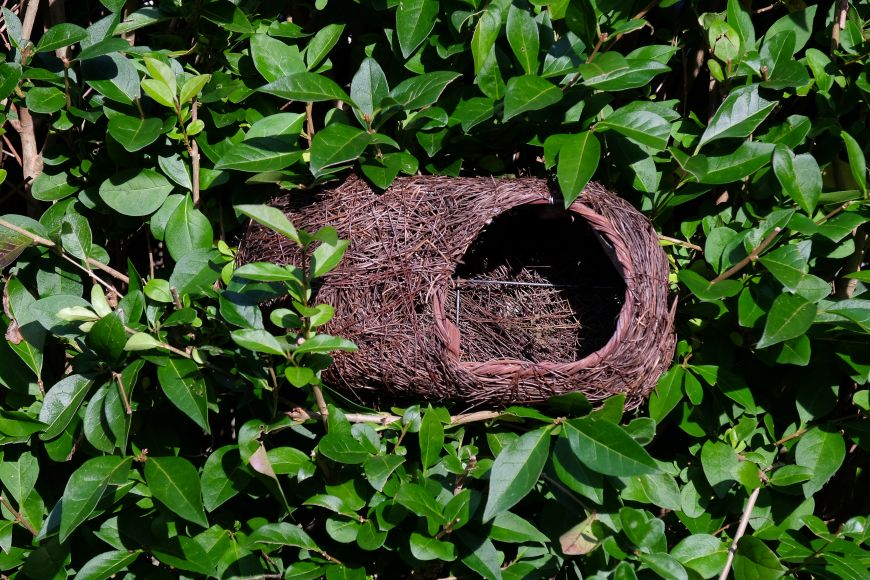 robin nest pocket | gardenature