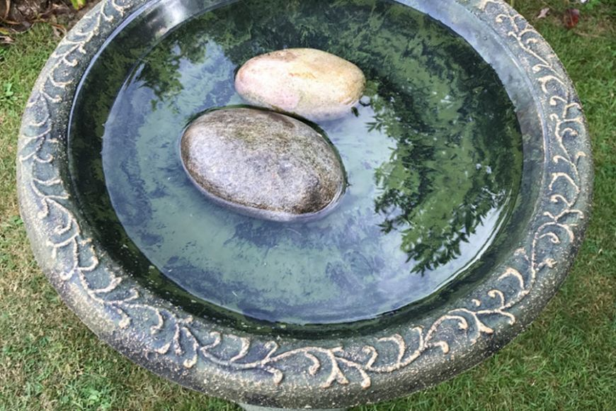 water bowl for birds   gardenature