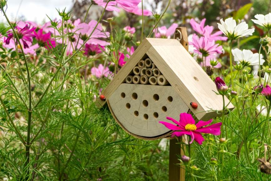 Insect box | gardenature.co.uk