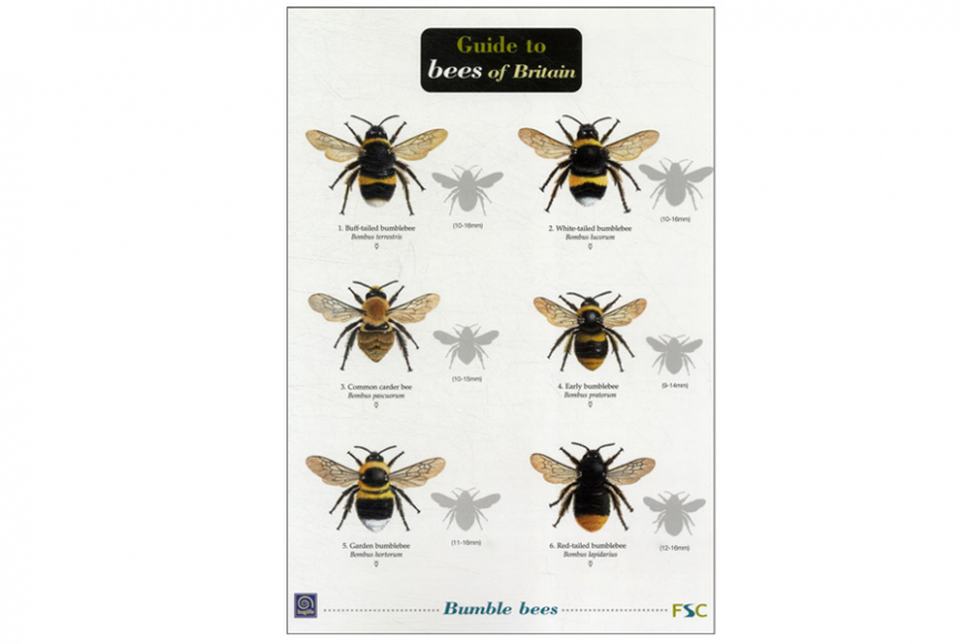 Guide to Bees |gardenature.co.uk
