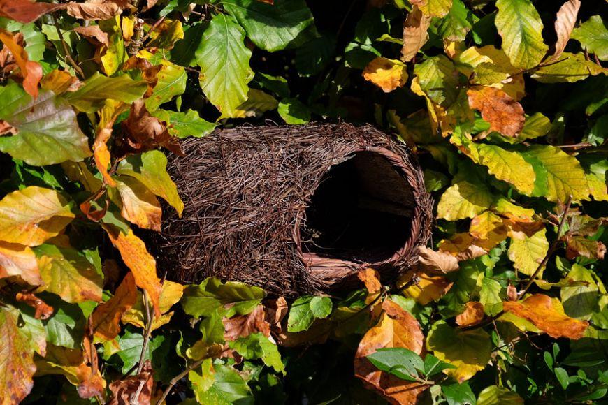 nest pocket for robins   gardenature