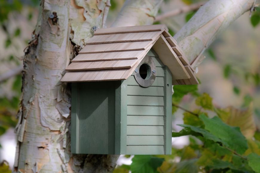 New England bird box