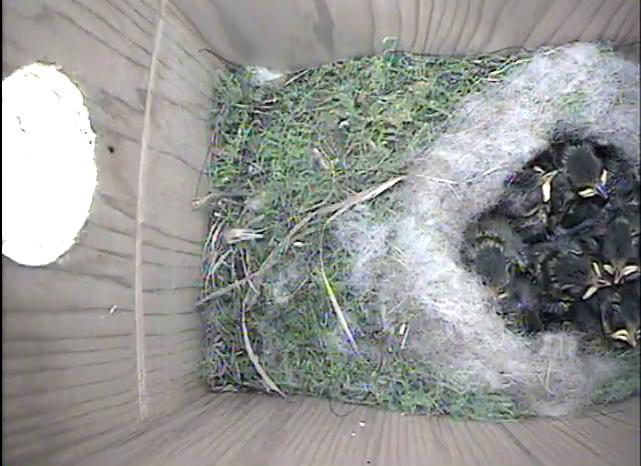 wifi camera nestbox|Gardenature