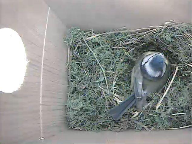 wirless bird box cameras |gardenature