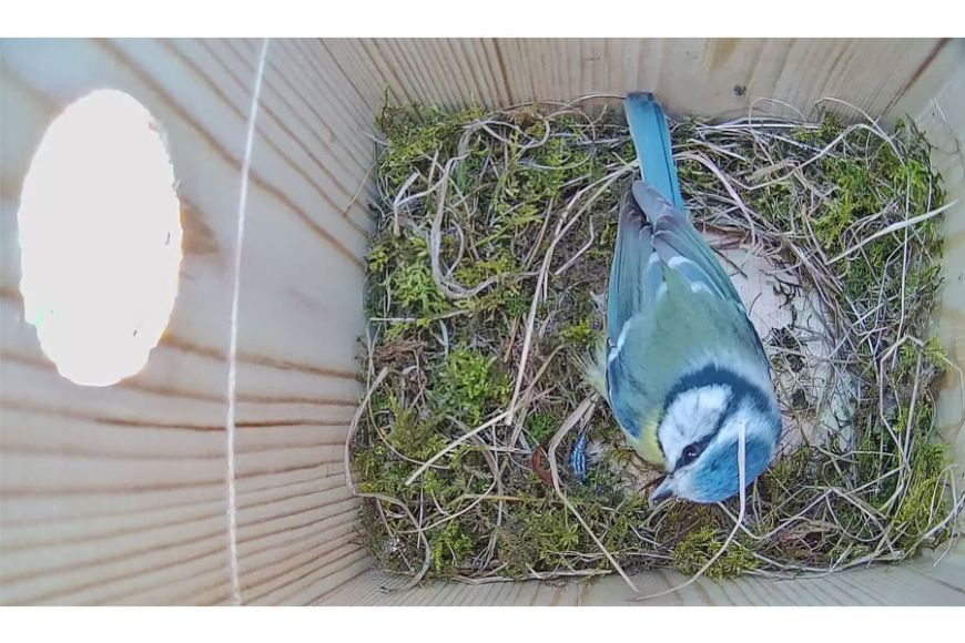 gardenature nest box camera