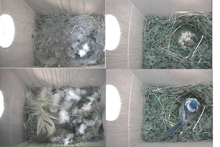 birds nest HD Camera