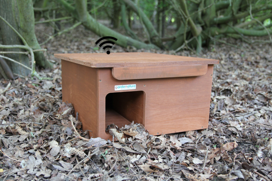 hedgehog box with wifi camera