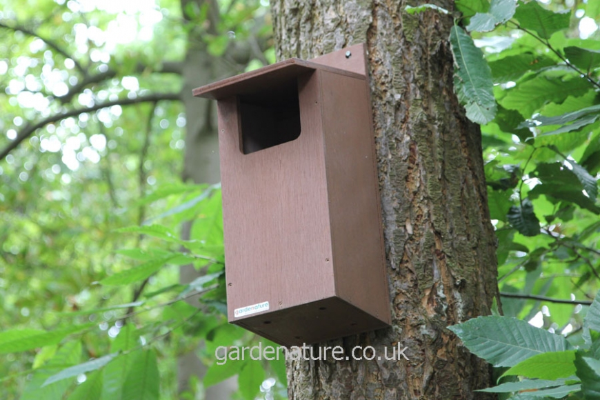 Little Owl Box |gardenature.co.uk