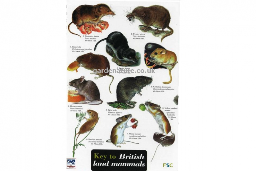 guide to british mammals