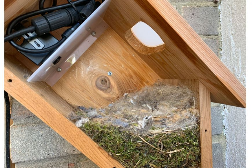 sideview bird box nest