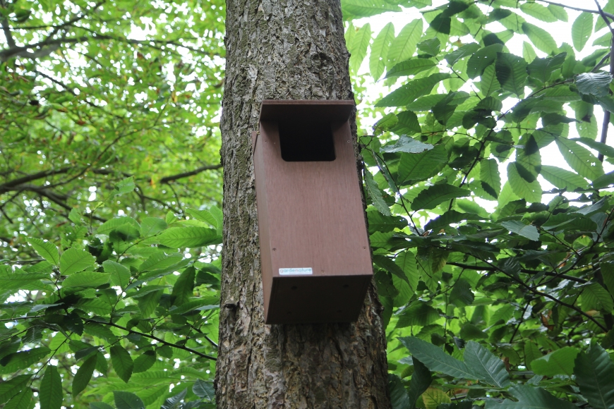woodland little owl box | gardenature.co.uk
