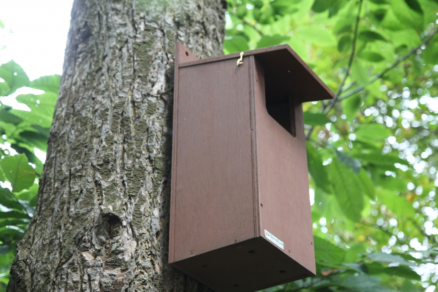 nest box for little owls| gardenature