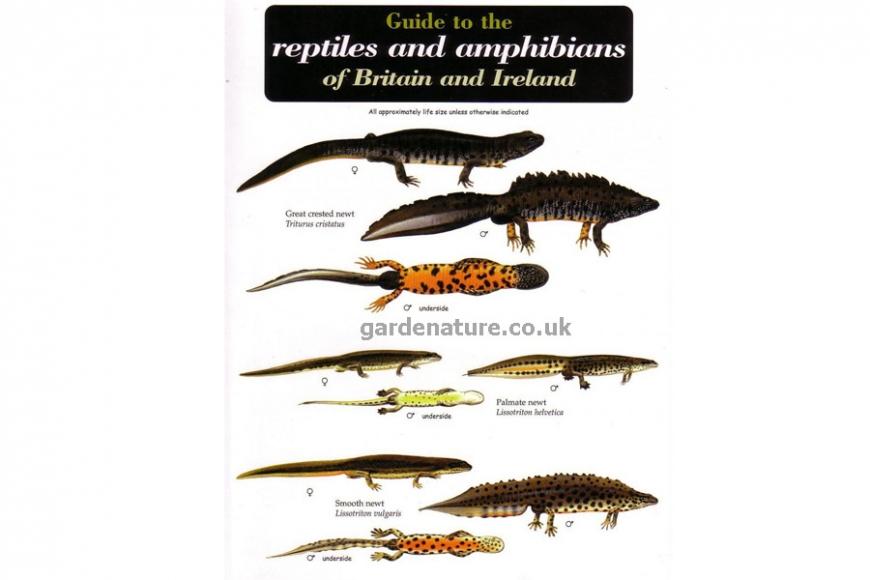 reptiles & amphibians guide