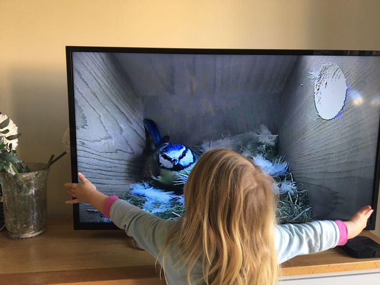 wireless camera nest box   gardenature