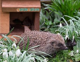Mammal & Amphibian Habitats | Gardenature
