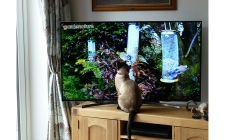 gardenature cat cam