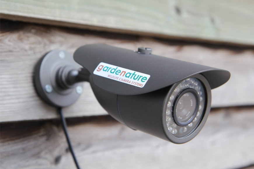 garden wildlife camera