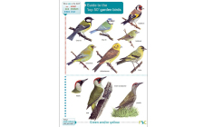 top 50 garden birds guide