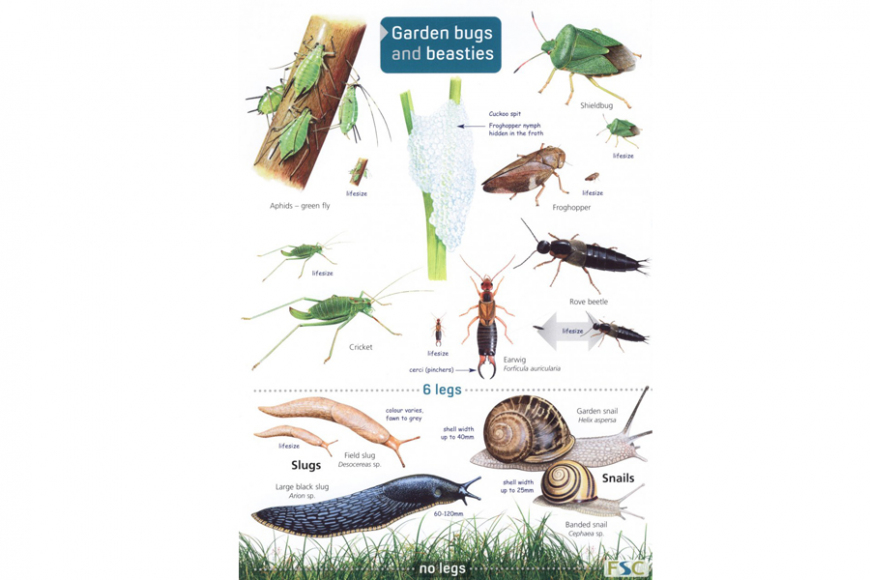 Guide to Garden Bugs and Beasties
