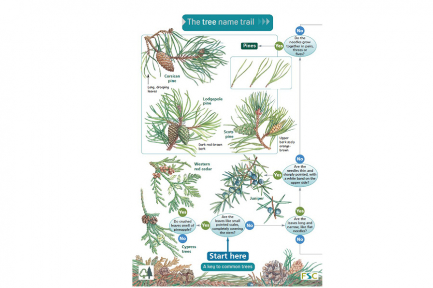 tree name trail | gardenature.co.uk