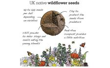 wildflower seedball mix | gardenature