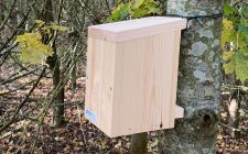 uk dormouse boxes