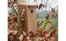 starling nesting box with a camera