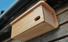 swift nestbox with wireless camera