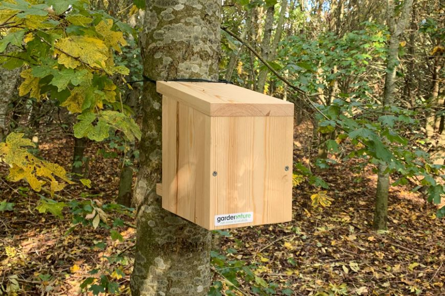 Common Dormouse box | Gardenature