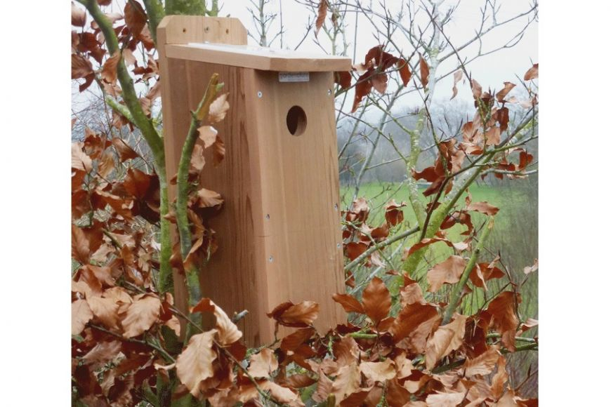 woodpecker bird box with camera