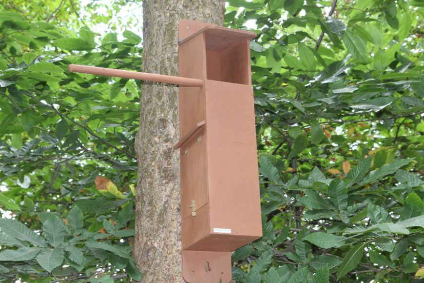 wireless camera tawny owl box