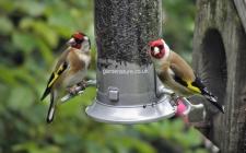 Bird feeder camera