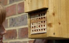 Schools Bee box Cam | gardenature.co.uk