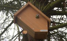 side view ip camera bird box