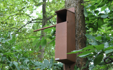 Wireless Tawny Owl Box Camera System