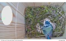 IP Bird box cameras | Gardenature