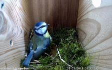 HD bird box cameras | gardenature