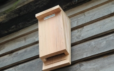 single bat box