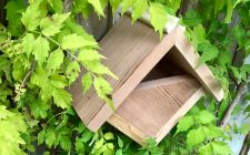 robin box | gardenature.co.uk